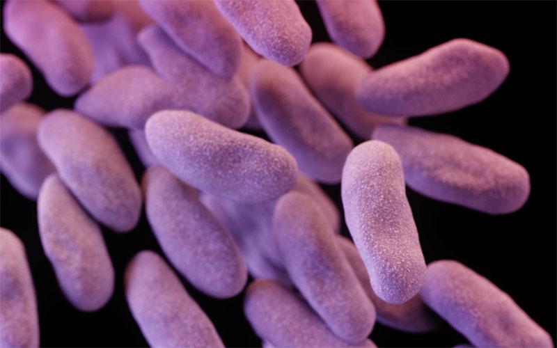 CRE bacteria