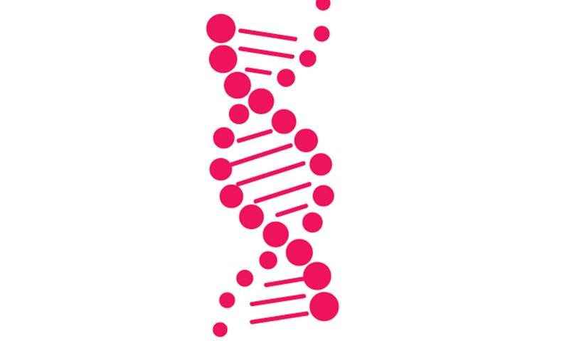 Beta cells strand