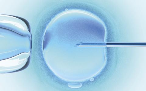 Embryo: iStock