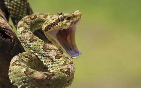 p10-13-news-snake-istock-108350615-.jpg