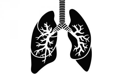 p8-13-lungs-istock-166011791-.jpg