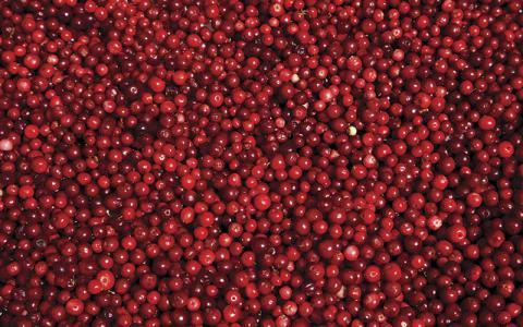 p8-13-news-cranberries-istock-157503221-.jpg